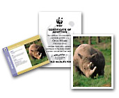 Rhino adoption certificate, photo and spotlight card
