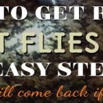 How to Get Rid of Fruit Flies Fast: 9 easy steps (Fruit flies will come back if you skip #5)