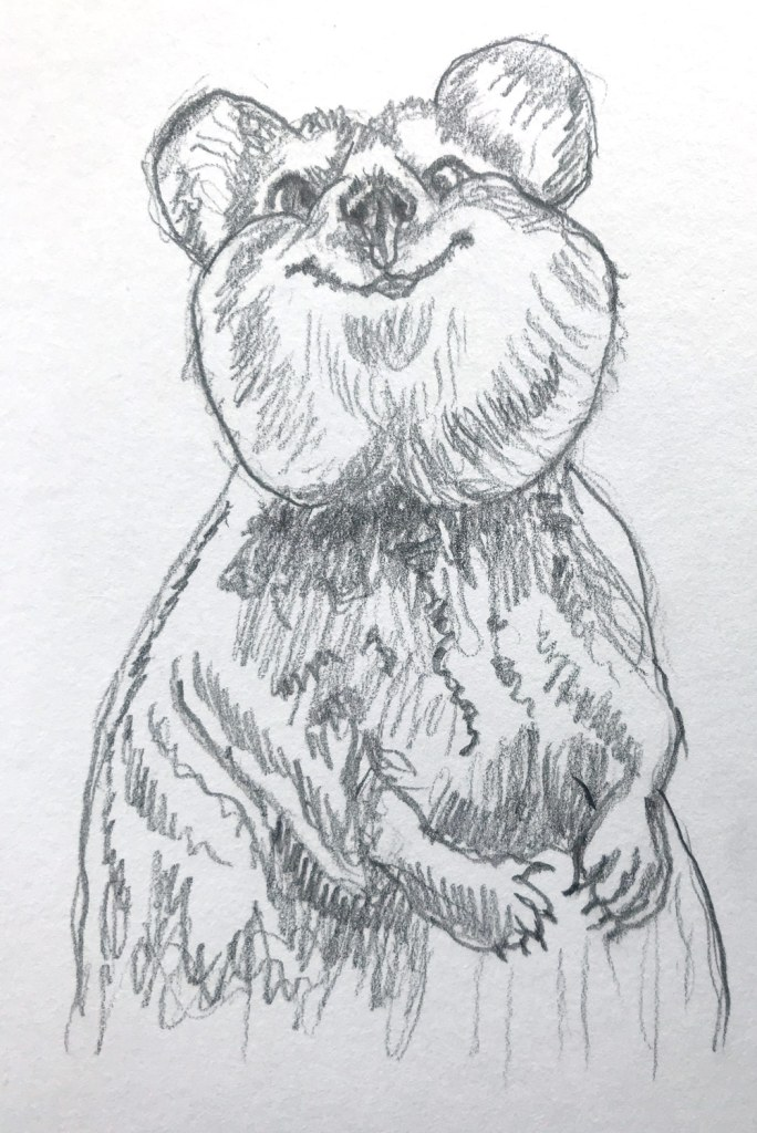 Quokka drawing