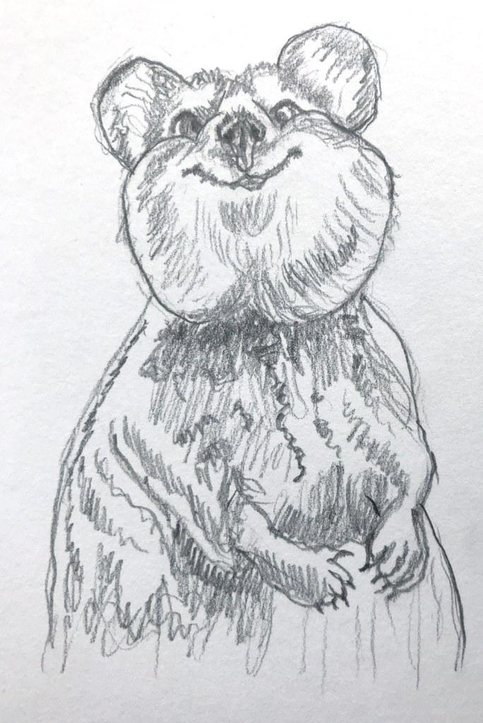 Quokka drawing