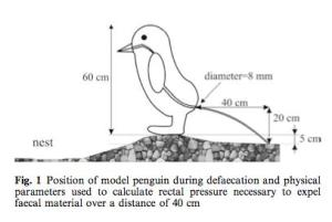 Projectile penguin poop | Worms & Germs Blog