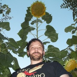 Ken McKim standing in front of an 8-foot sunflower
