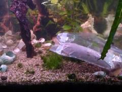 Aquariumfermentatie