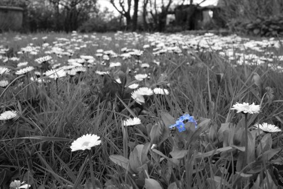 Blaue Blume. Foto: Björn Othlinghaus