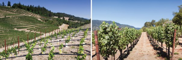Master of Vine: View from a ridge