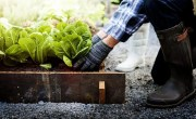 Growing Food in Containers