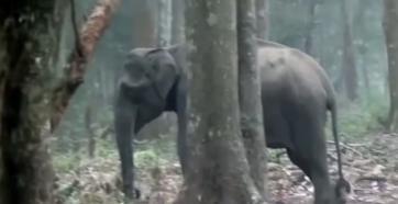 Elephant Smoking standing
