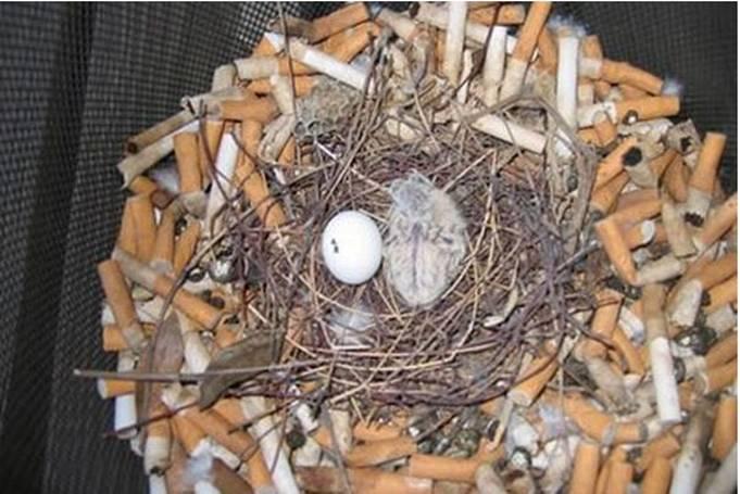 sigaret nest