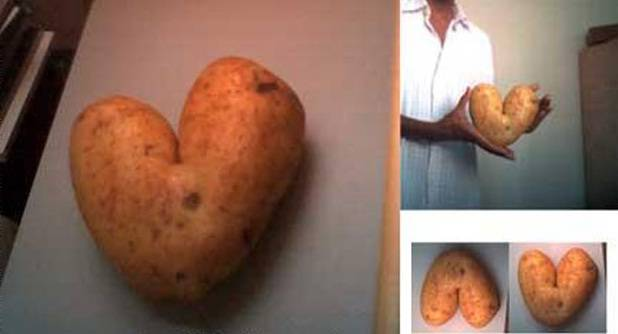 30 Funny Oddly Shaped Fruits And Vegetables Wow Amazing