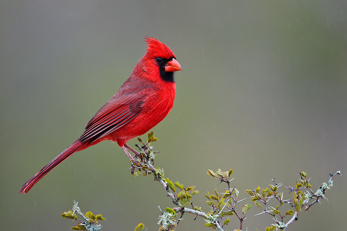 20 Most Beautiful Bird Species In The World Wow Amazing