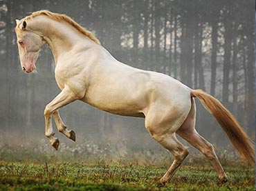 Majestic Horses Born With The Most Unusual Colors Wow Amazing