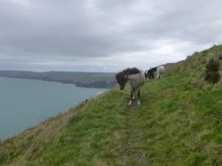 Pferde mitten am Weg - sie haben mich zum Glück vorbei gelassen