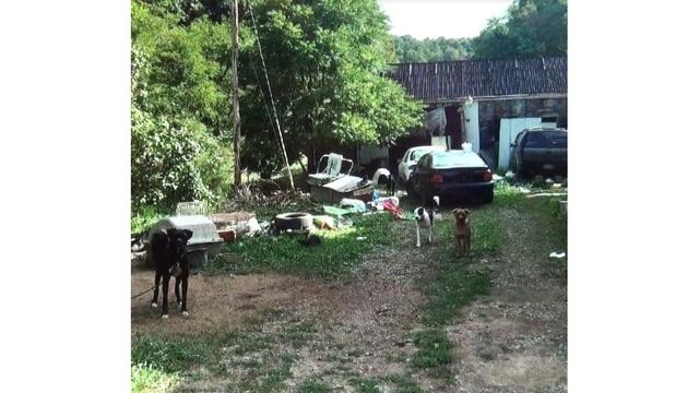 Wetzel County Dogs_1517881475666.jpg_33163282_ver1.0_640_360_1517916651280.jpg.jpg