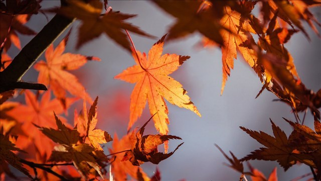 Foliage continues to provide color show in West Virginia