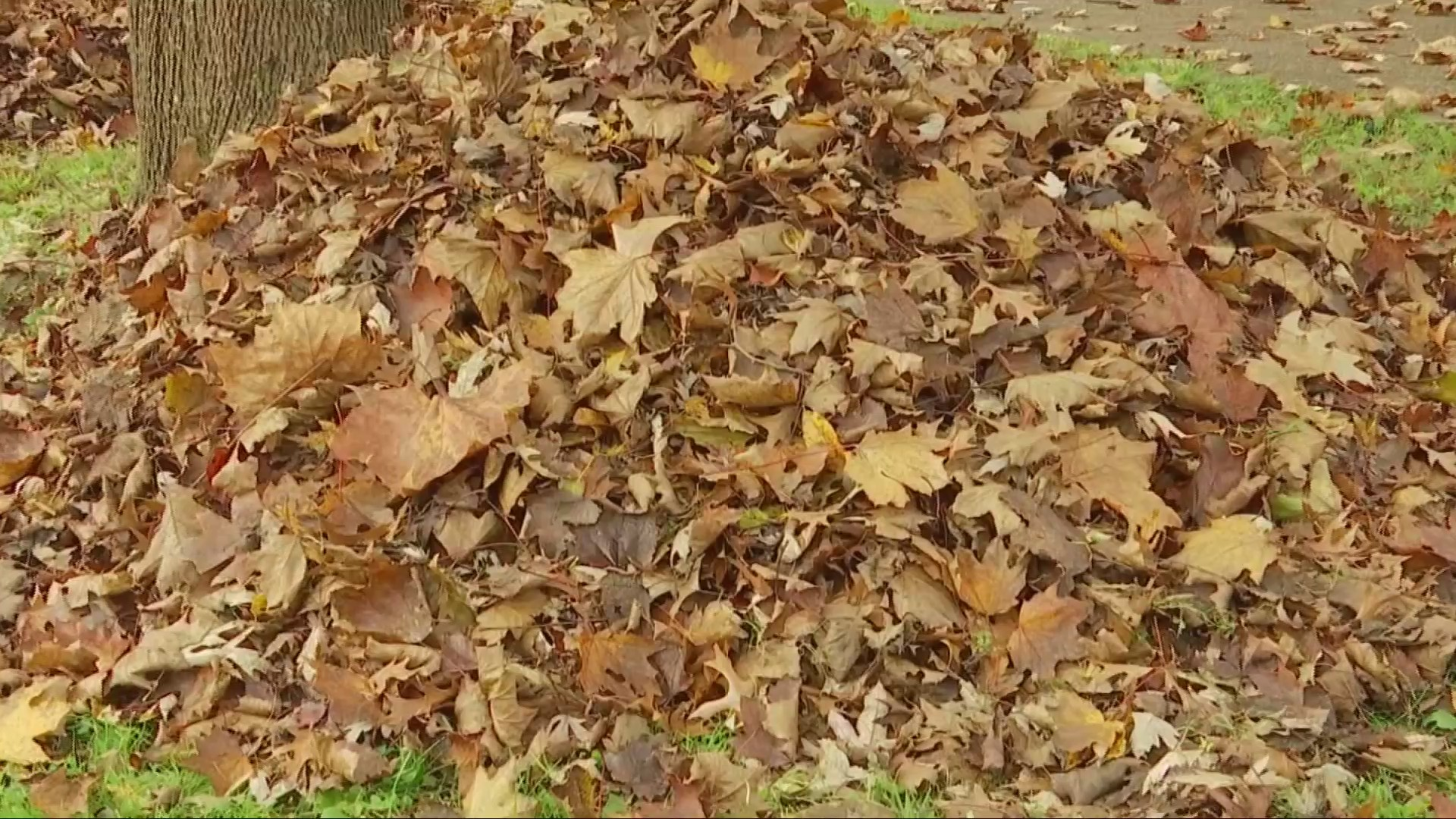 What You Need To Know About Leaf Disposal