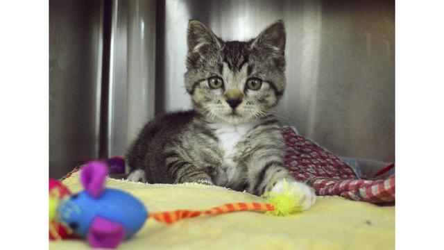 Foam Encased Kitten_1558132695656