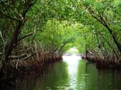 Fort Lauderdale limo-Airboat Ride Scenic Route picture