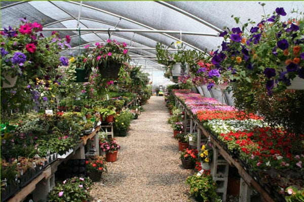 GIFT CERTIFICATE <br/> Donated by: KRING'S 1000 ISLANDS PRODUCE & NURSERY <br/> Valued at: $50