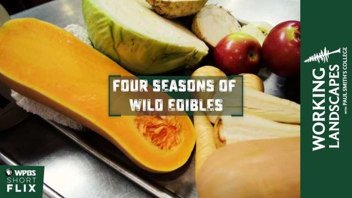 Four Seasons of Wild Edibles | Working Landscapes with Paul Smith's College  | WPBS Short Flix