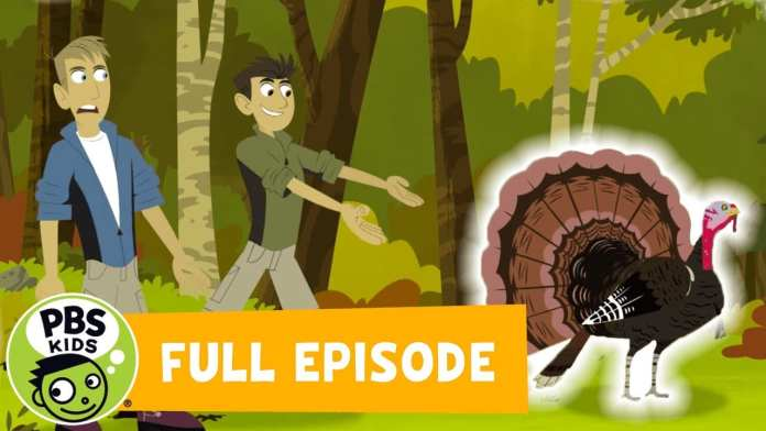 Wild Kratts | 🦃Happy Turkey Day! | PBS KIDS