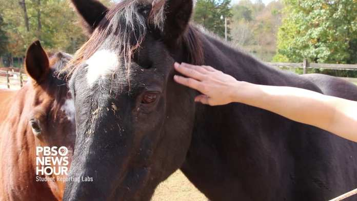 At Bit of Hope Ranch, horses and technology make therapy more effective for troubled youth