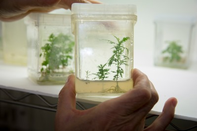Weathers with tissue culture