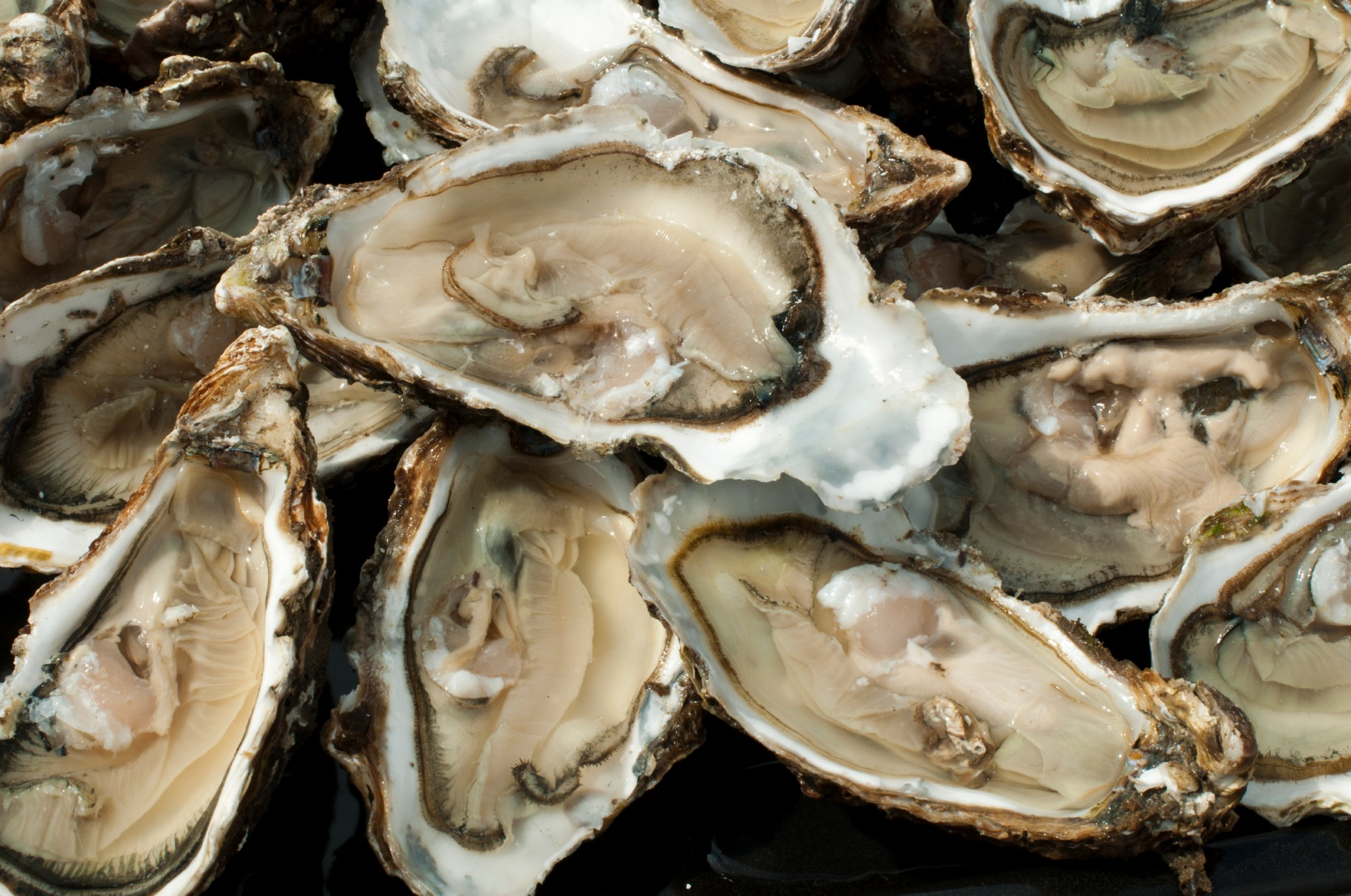 Oysters on a silver platter_287344