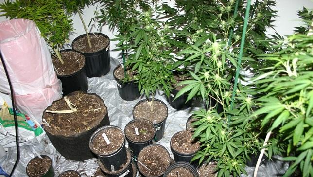 marijuana1_358078