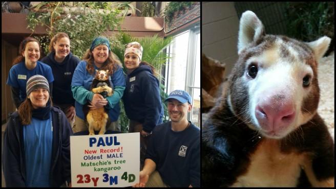 paul-matschies-tree-kangaroo-roger-williams-park-zoo_1522259123695.jpg