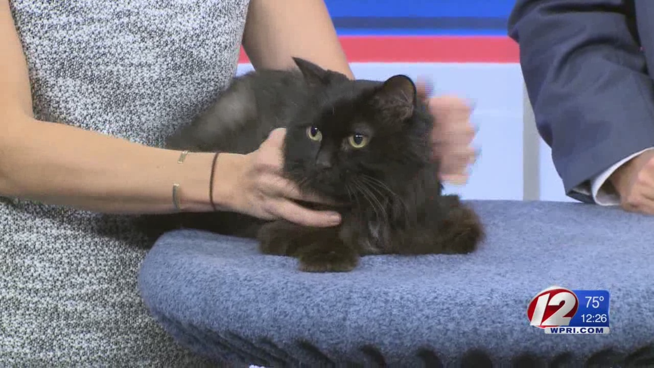 Rescue a Pet: Charley