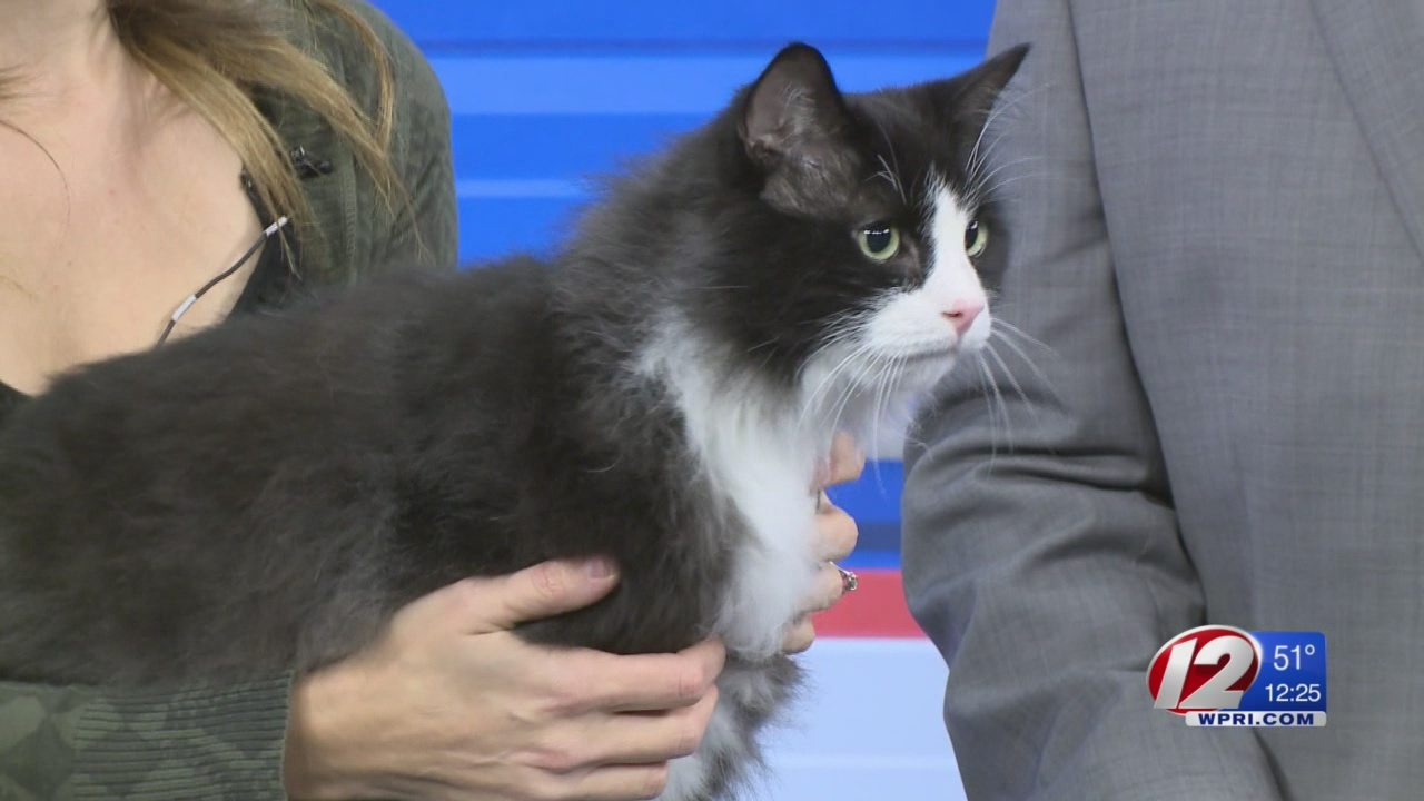 Pet in need of rescue: Mr. Tubbs