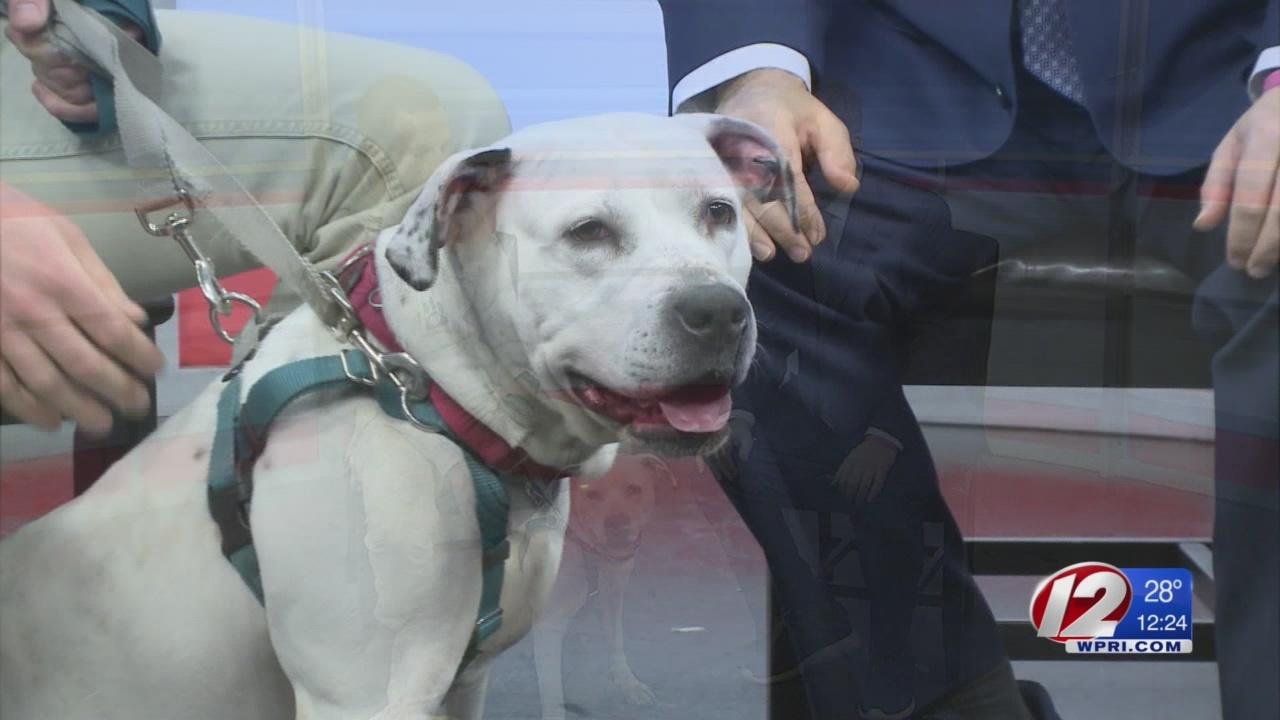 Rescue a Pet: Sorbet