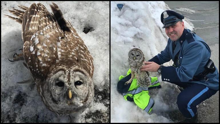 owl rescued_1552425964466.jpg.jpg