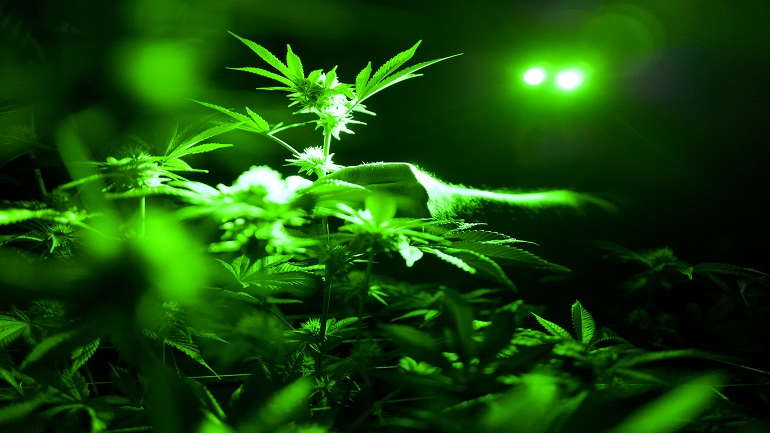 Marijuana Opioids_1560199824140
