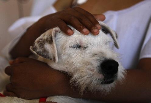 Ecuador Therapy Dogs_233013