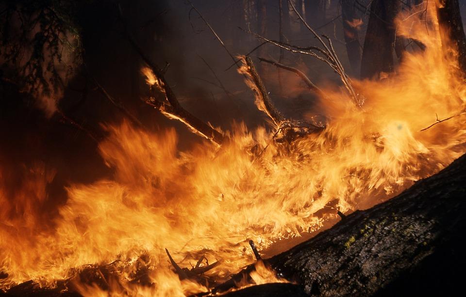 wildfire-1117900_960_720_226443