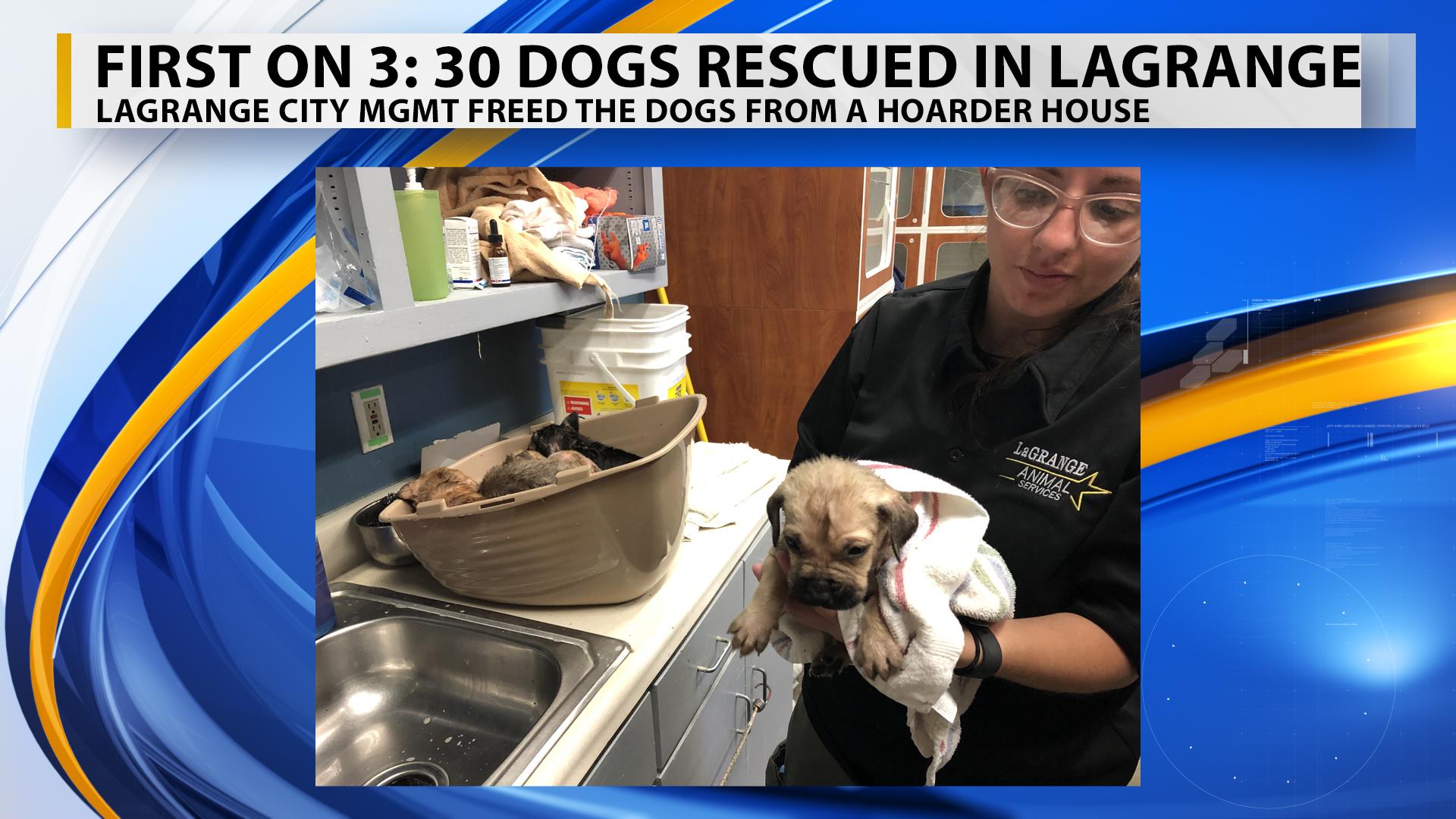 lagrange puppy hoarding branded_1559332614125.jpg.jpg