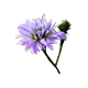 icon_flower%e0%b8%94%e0%b8%ad%e0%b8%81%e0%b8%84%e0%b8%b1%e0%b8%95%e0%b9%80%e0%b8%95%e0%b8%ad%e0%b8%a3%e0%b9%8c%e0%b8%a1%e0%b9%88%e0%b8%a7%e0%b8%87