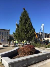2015 City Christmas Tree