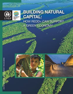 Building Natural Capital: How REDD+ Can Support a Green Economy