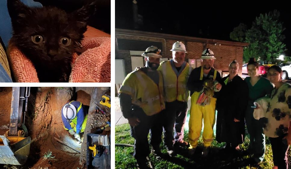 Crews work 5 hours during storm to rescue kitten from
