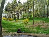 Zielony Teheran