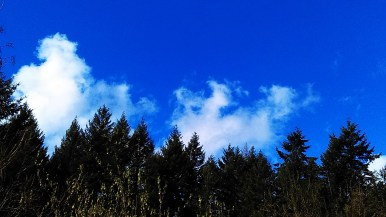 Ah, Nature! Tree-fresh oxgen, happy blue sky, cumulus fractus clouds,