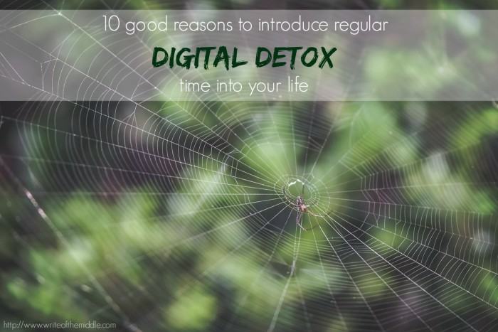 spiders web, digital detox