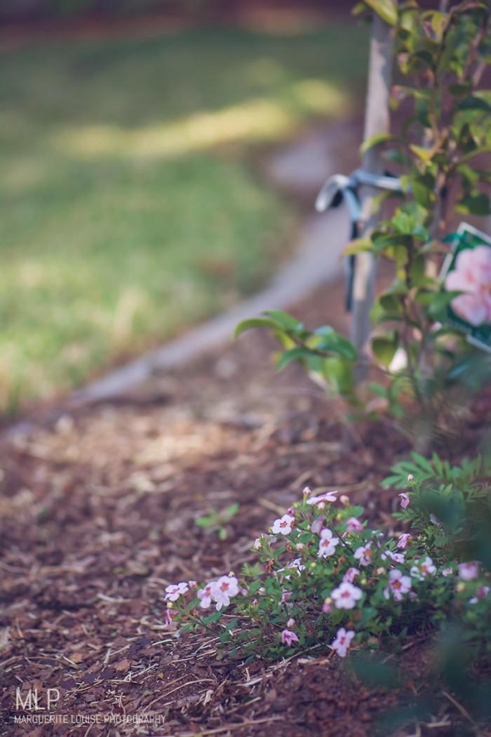 garden, winter, brisbane, australia