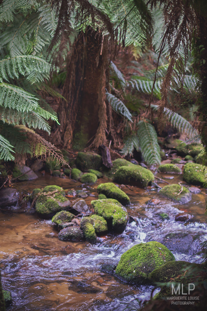 St Columba Falls, Tasmania, Waterfall, Rainforest