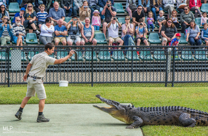 crocodile, australia, zoo, australia zoo, reptile