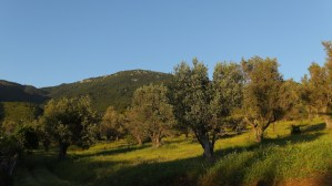 La Bodeguita Writing Retreat Dafni Mountain View