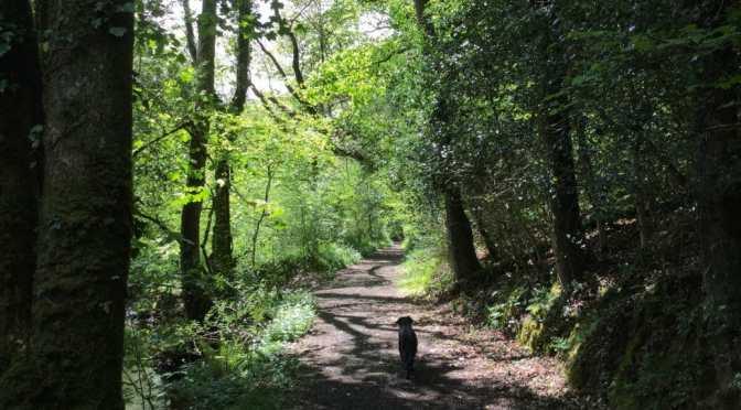 Halsdon Nature Reserve