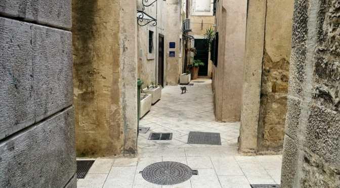 Cats of the Dalmatian Coast